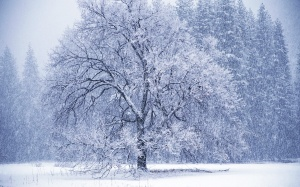 snowing-54687